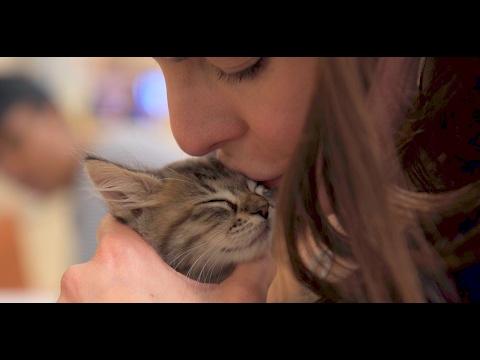Saving Lives Together: San Antonio Pets Alive