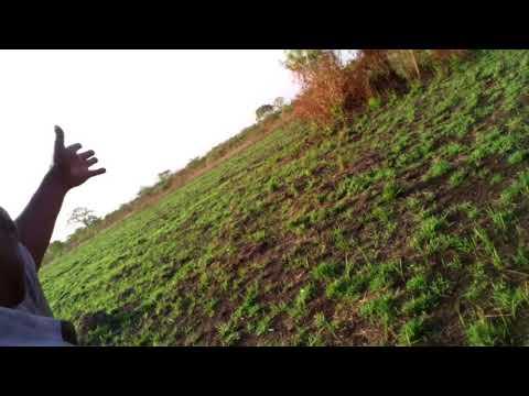 15 Acres in Akuse Ghana