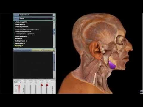 McGraw-Hill Education Connect for Anatomy and Physiology