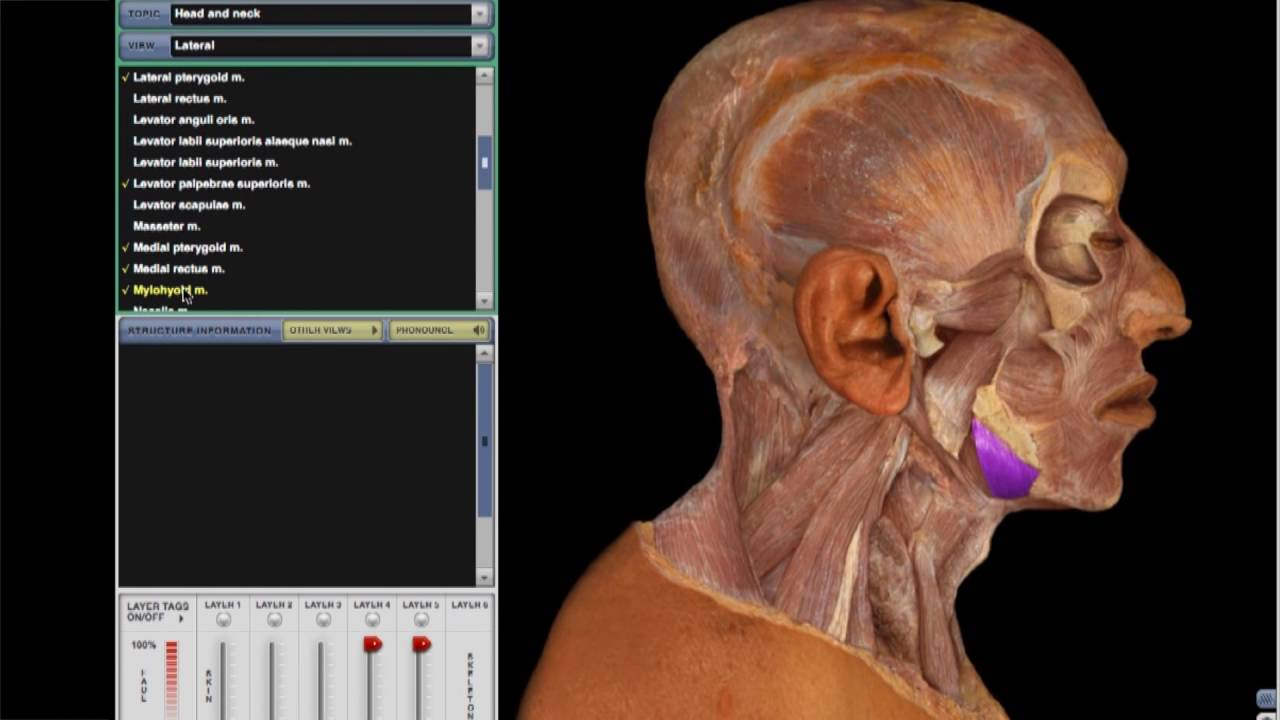 McGraw-Hill Education Connect for Anatomy and Physiology - YouTube