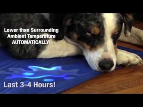 the-green-pet-shop-dog-cooling-pad---the-warming-store