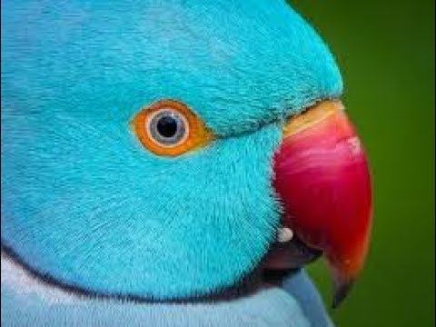 Parrot Training Tricks