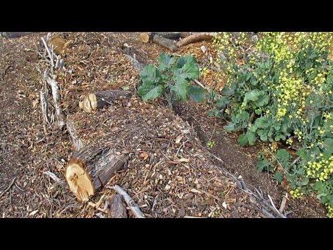 Annual Backyard Hugelkultur Maintenance & Planting Out The Beds