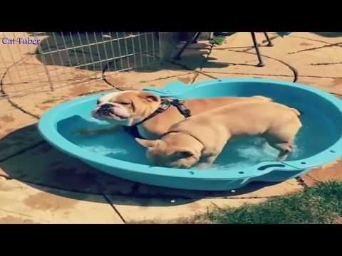 *IF YOU LAUGH YOU LOSE CHALLENGE* Funny Animals Compilation