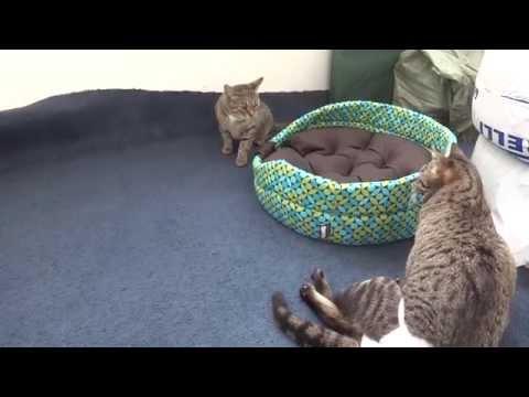 Корм для кошек Schesir (Шезир) - отзывы и советы