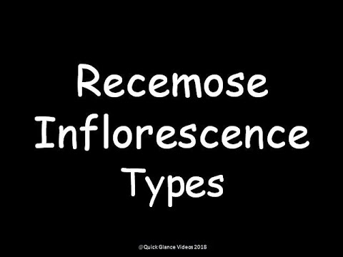 Recemose inflorescence with examples
