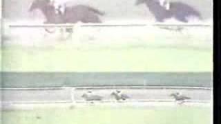Clasico Jose Antonio Paez 1981