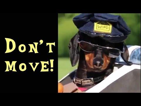 Смешные собаки (110 фото) » Триникси