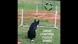 Border Collie Lincoln Agility Training Sept 2012