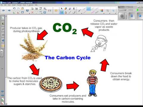 Water Cycle   Part 3   Carbon, Oxygen, Nitrogen Cycles
