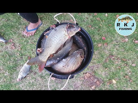 20 Carp Caught In 2 Hours! Fishing A HOT Bite At Lake Weeroona