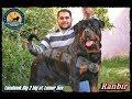 من اجمل الانثي  الروت فيلر فى مصر مستورده 01002898666