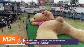 В Мексике создали самого большого плюшевого медведя - Москва 24