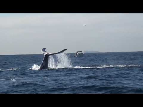 Spectacular Whale Watching In Sydney Australia