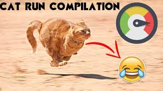 funny Run vines (Cat Version)| Funny Cat Run Video!! Most Hilarious !!!