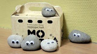 Домашний Питомец КАМЕНЬ !!! )))