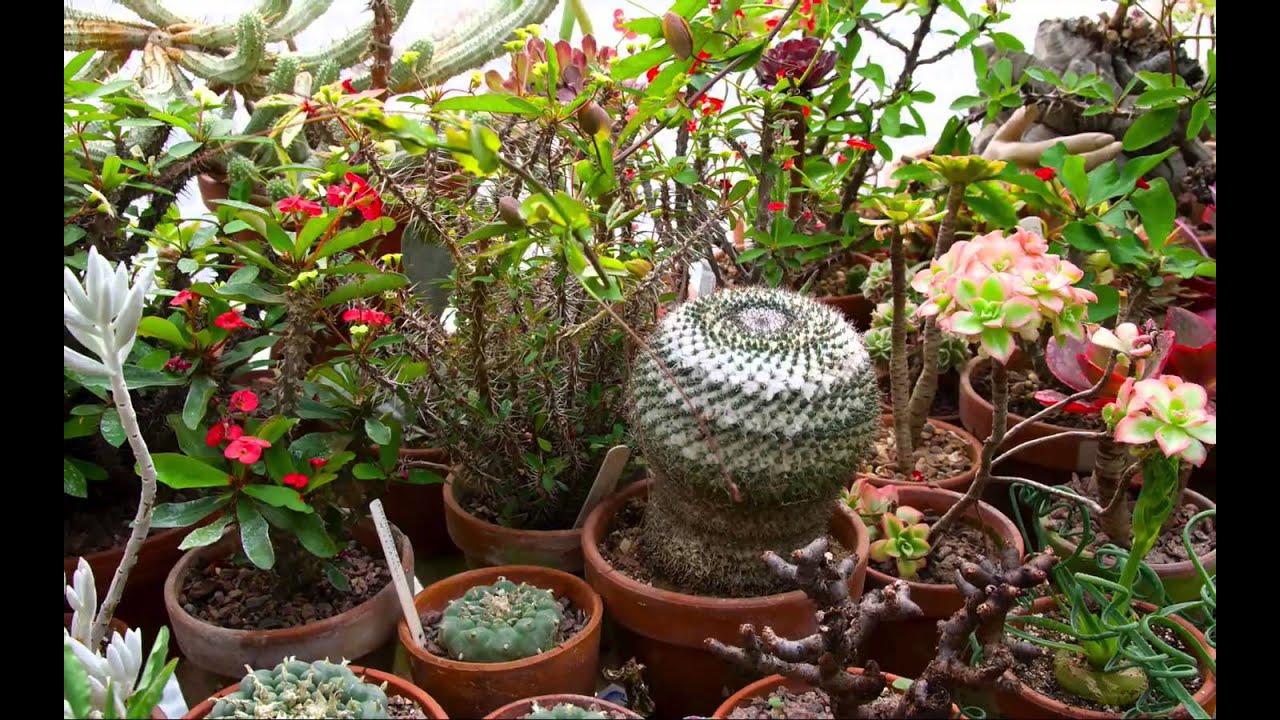 The Exotic Garden, Norwich - Will Giles\'s tropical garden paradise ...