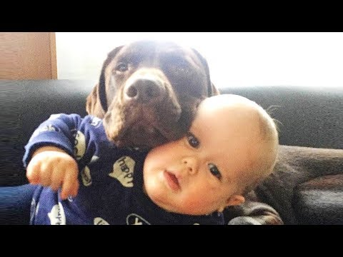 Funny moments of Dog and Baby | Dog loves Baby Video