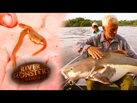Catching The Redtail Catfish - River Monsters