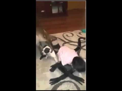Monkeys Kissing Puppies Youtube