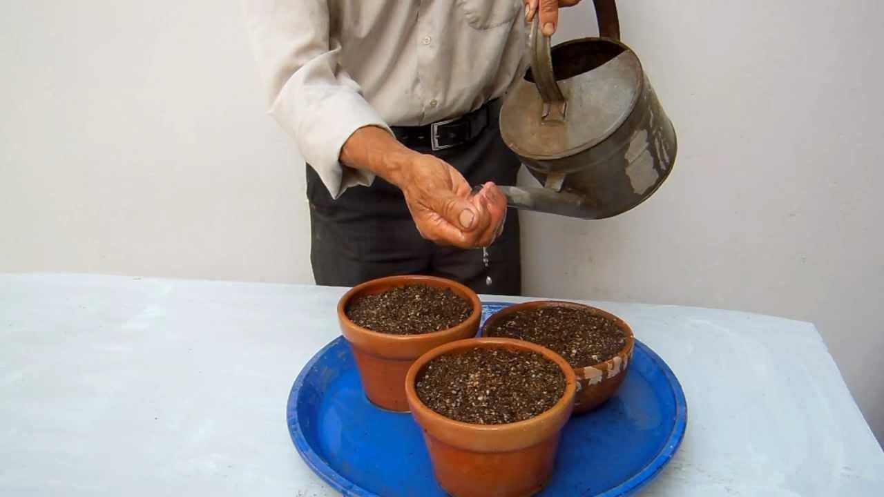 Como cultivar un bonsai desde semilla i como cultivar un - Como cultivar bonsais ...