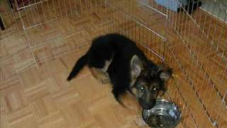 Solea the incredible puppy