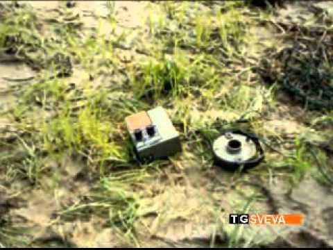 Trappola per uccelli africana funnydog tv for Trappola piccioni