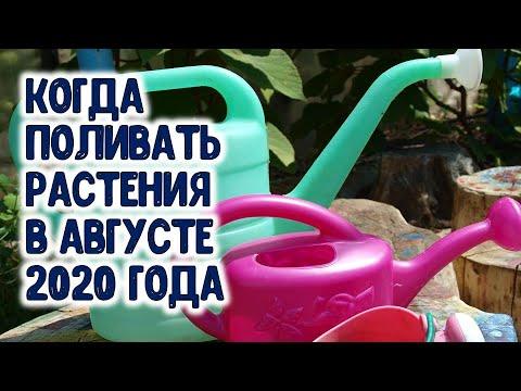 Когда поливать растения сада и огорода в августе 2020 года? Агрогороскоп на август 2020 года. | капельный | горяченко | поливать | орошение | томатов | огорода | своими | руками | огород | раиса