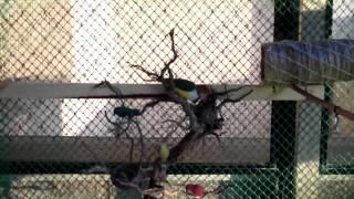 Viveiro de pássaros exóticos na varanda