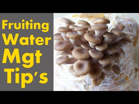 Oysters Mushrooms Fruiting Tips & Water Management Tips Suggestions