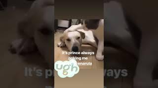 Funny video of /#Prince Narula's pets