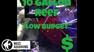 how to set up a 10 gallon reef tank on a low budget