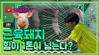 |돼지농장후기| 수.소.수 (Feat. 돼지농장에서 뭐해 / 수의대생실습 / 공부자극)