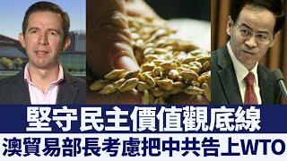 澳貿易部長:中共干預貿易 或考慮告上WTO|新唐人亞太電視|20200518