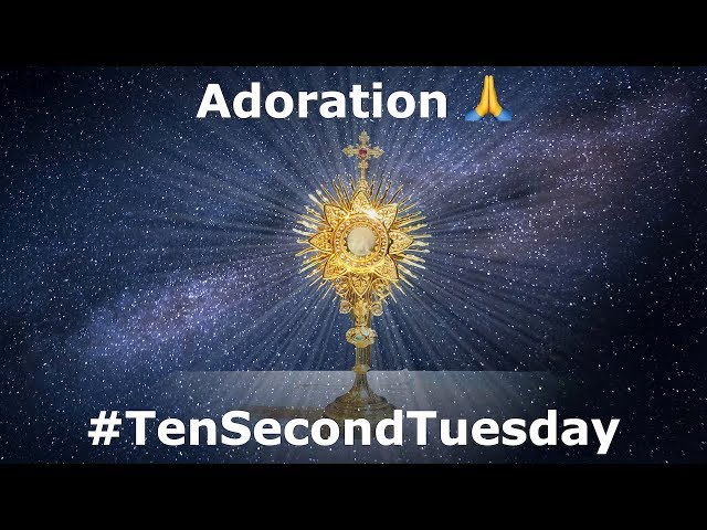Adoration 🙏: #TenSecondTuesday