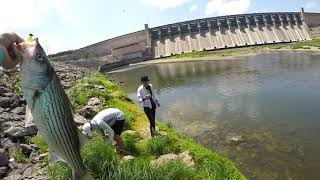 Mix Fishing Striper Bass and Hybrid  Whitney and Possum Kingdom Dam