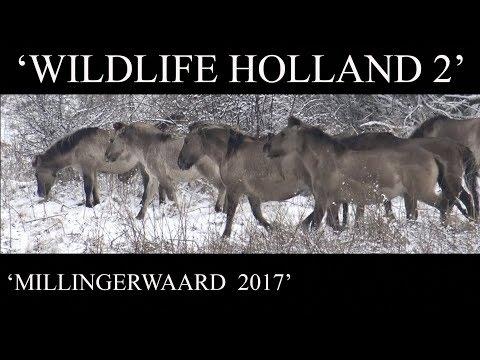 WILDLIFE HOLLAND 2 - MILLINGERWAARD 2017 - JEROWORLD
