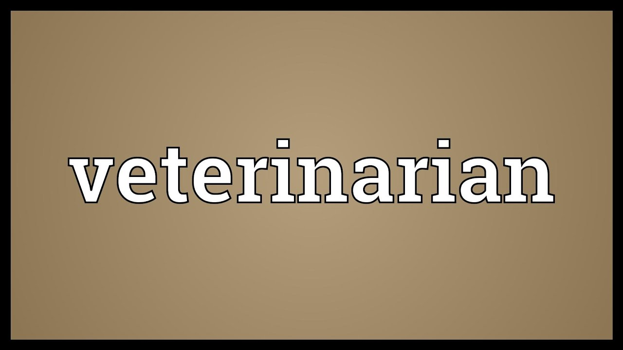 Veterinarian Meaning