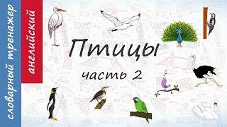 Птицы на английском. Часть 2.