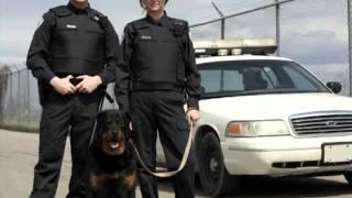 Dog World Services - Guard Dog Rental Service Dallas, Tx