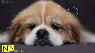 10 Hours Calming Sleep Music  Stress Relief Music, Insomnia, Relaxing Sleep Music ♬ Baby Dog Pet