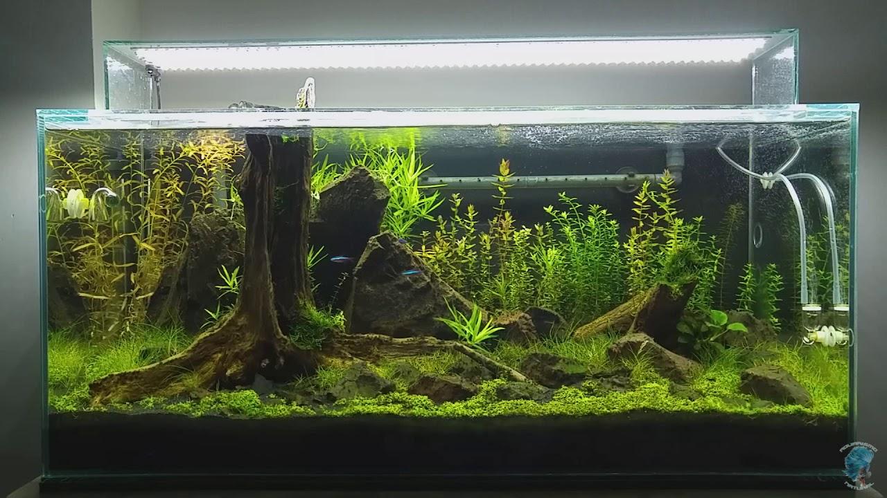 Aquarismo Natural – Manutenção do aquários #020