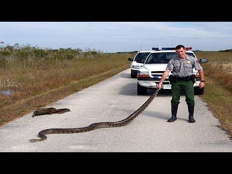 Download 8 of Florida's Most Invasive Species