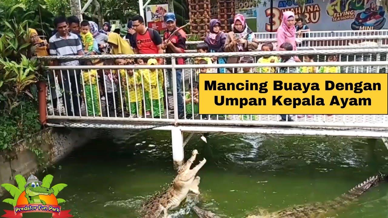 Download Liburan ke Predator Fun Park Diajakin Mancing Buaya Sama Kakak Nila Outbound. Pasti Seru & Deg Degan