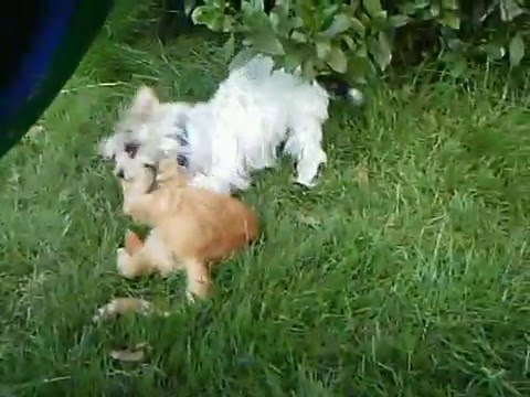 Chien vs chat marrant drole youtube - Photo chat marrant ...