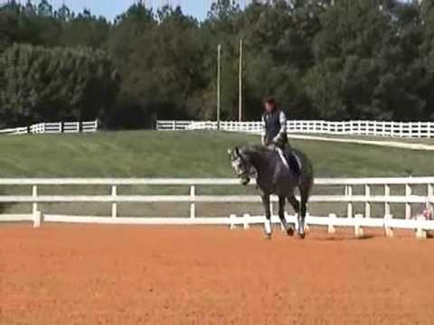 SOLD! Beautiful Thoroughbred Dressage gelding for sale