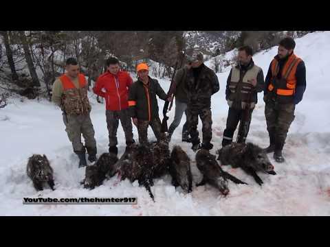 CEO TRUST DOMUZ AVI 7 Wild Boar Hunting