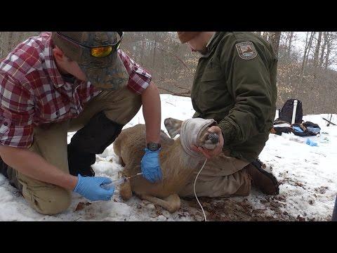 Kentucky Deer Population Study