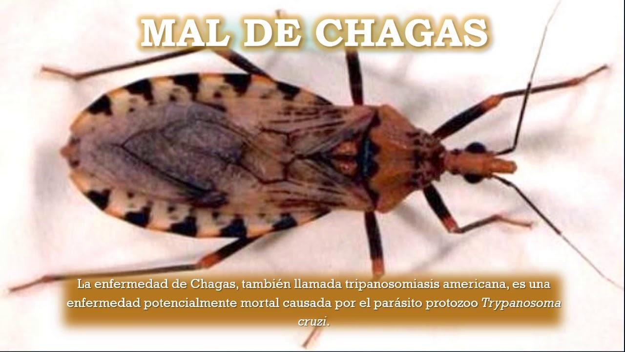 trypanosoma patologia