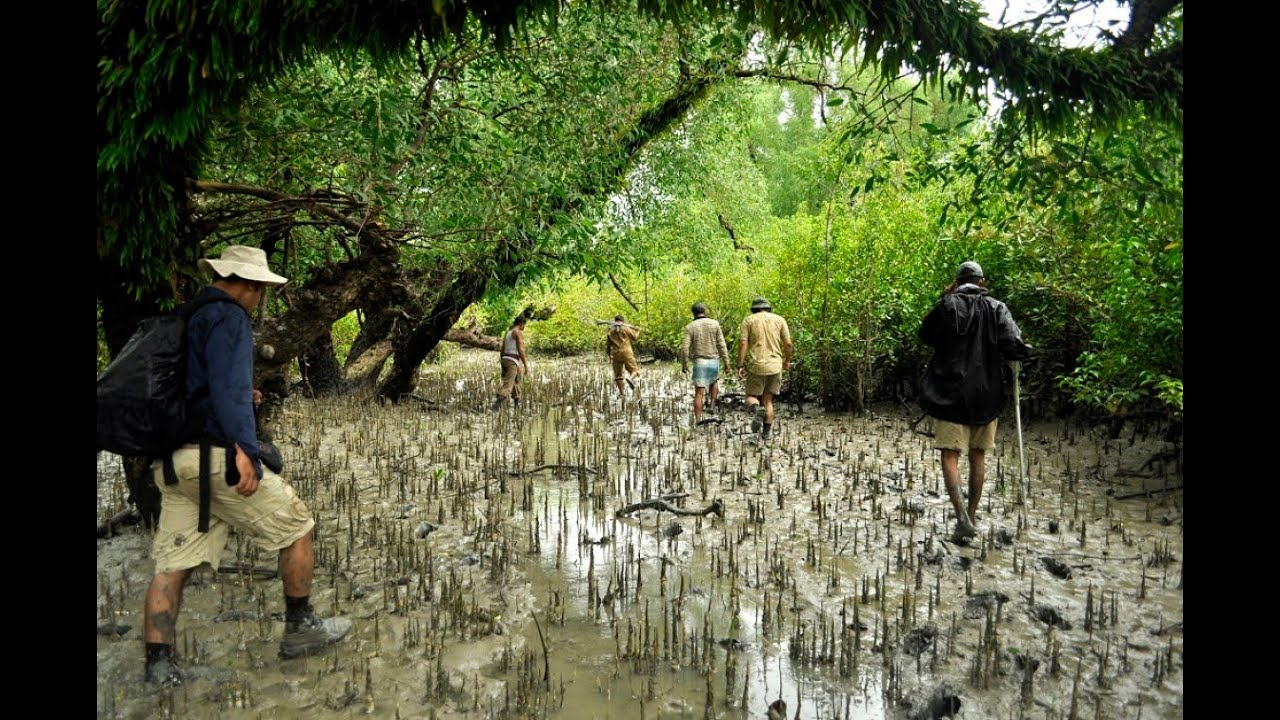 Image result for sundarban forest